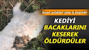 Kediye İşkence Ederek Öldürdüler