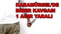 Karamürsel'de Biber Kavgası 2 Yaralı
