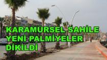Karamürsel Sahile Yeni Palmiyeler  Dikildi