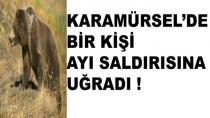 Karamürsel'de Bir Kişiye Ayı Saldırdı