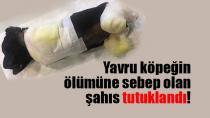 Yavru Köpeğin Ölümüyle İlgili Bir Kişi Tutuklandı