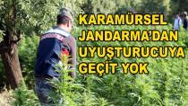 Karamürsel Jandarma'dan Uyuşturucuya Geçit Yok