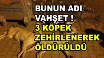 Karamürsel'de 3 Köpek Zehirlenerek Öldürüldü