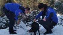 Karamürsel Belediyesi Sokak Hayvanlarını Unutmadı